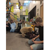 Puppy Jack op visite in 8B